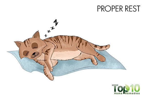 give rest to your cat to reduce cystitis