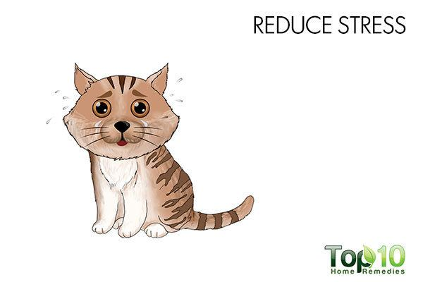reduce stress in cat to treat cystitis