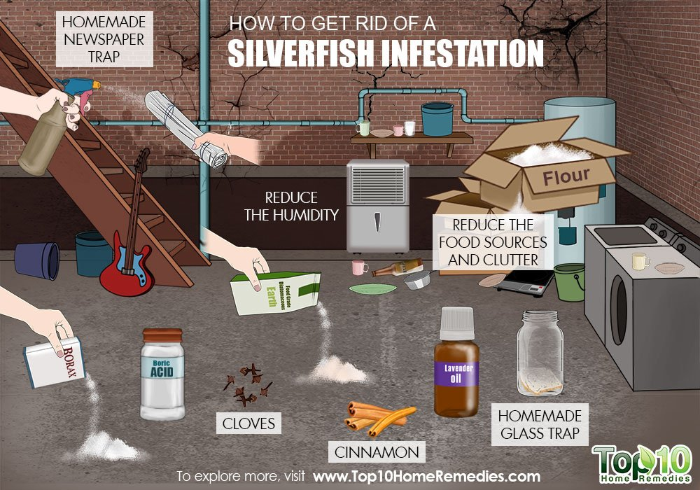 how to get rid of a silverfish infestation top 10 home remedies. Black Bedroom Furniture Sets. Home Design Ideas