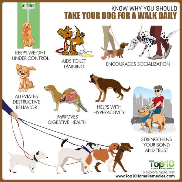 why to take your dog for a daily walk