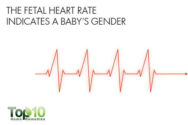 pregnancy myth fetal heart rate indicates baby gender