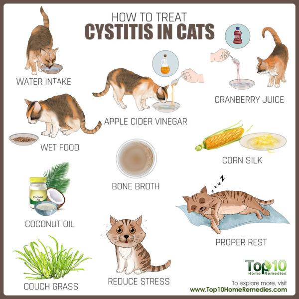 treat cystitis in cats