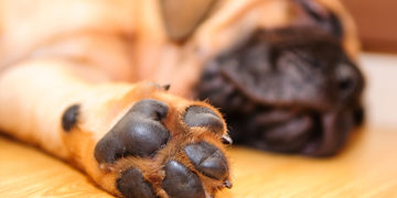 10 Useful tips for taking care of your dog's paw