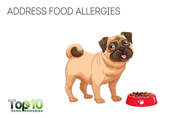 address food allergies to prevent dog from licking paws