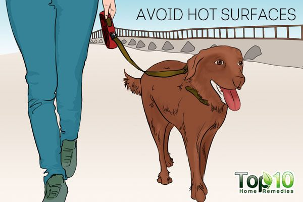 Avoid walking your dog on hot surfaces to take care of your dog's paws