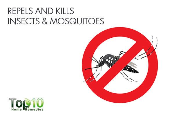 Use camphor essential oil to repel and kill insects and mosquitoes