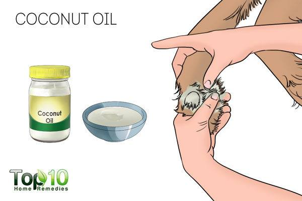 coconut oil to avoid dog paw licking