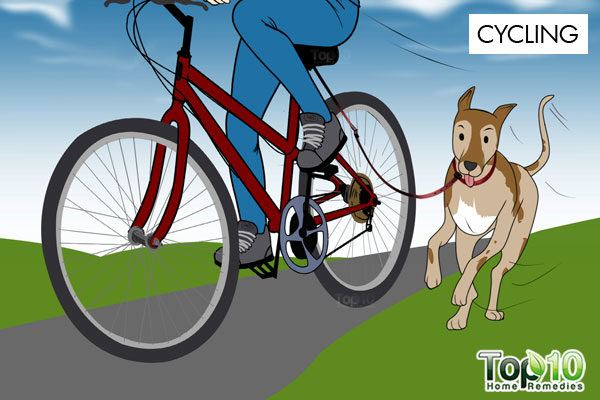 exercise your dog while cycling