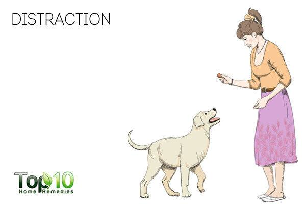 distract your dog to stop dog from licking paws