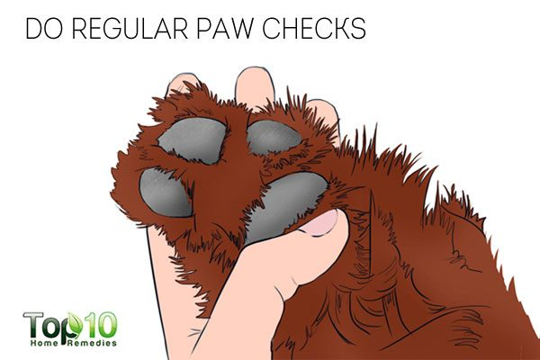 Do regular paw checks to remove any foreign objects and take care of your dog's paws