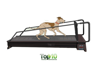 10 Exercises that will Extend Your Dog's Life