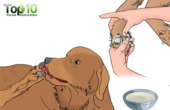 Home Remedies to Prevent or Stop Your Dog from Licking Their Paws