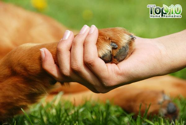 Follow these 10 useful tips to take care of your dog's paws