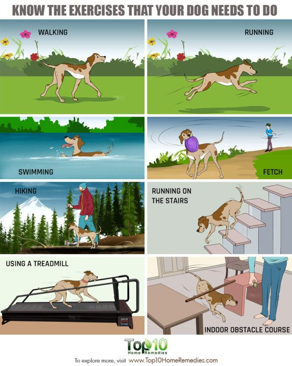 best exercises for dogs