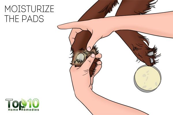 Moisturize the pads to avoid infection and take care of your dog's paws