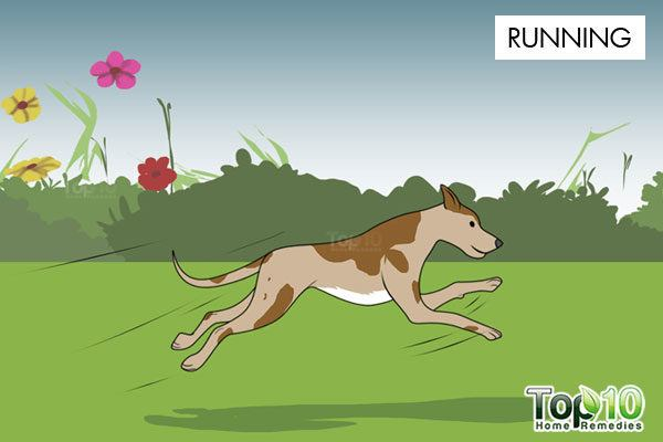 running exercise for dogs