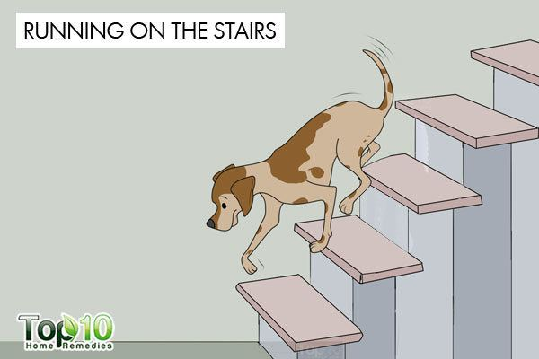 dog exercise running on stair