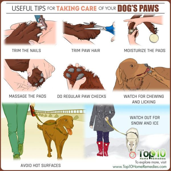 How to take care of your dog's paws