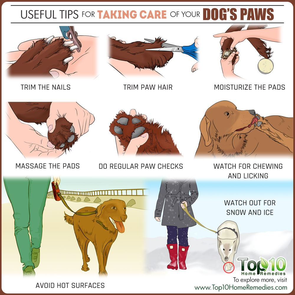 10 Useful Tips For Taking Care Of Your Dog S Paws Top 10