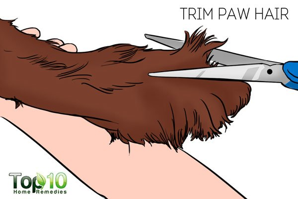 Trim the paw hair to prevent fungal infections and take care of your dog's paws