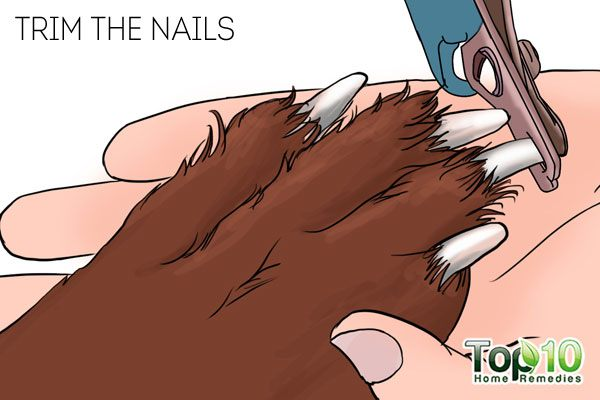 Trim the nails to take care of your dog's paws