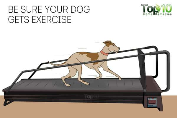Exercise to keep your dog healthy in winter