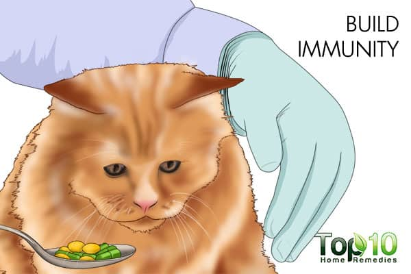 How To Treat And Prevent Urinary Tract Infections In Cats