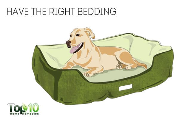 Right bedding to keep your dog healthy in winter