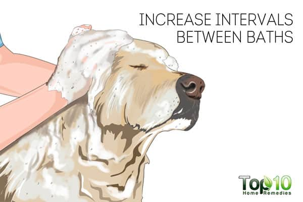 Infrequent baths to keep your dog healthy in winter