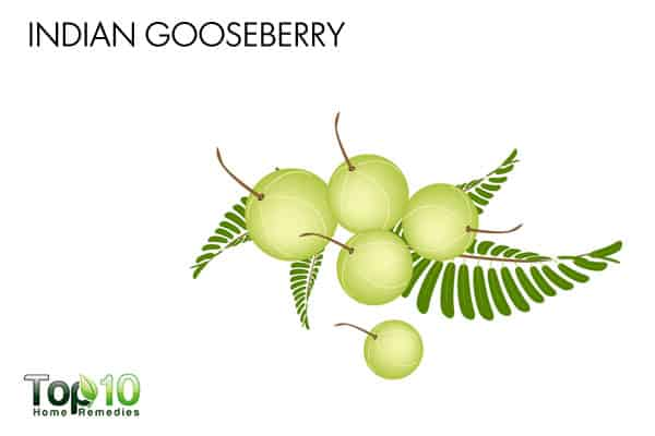 indian gooseberry to treat UTI during pregnancy