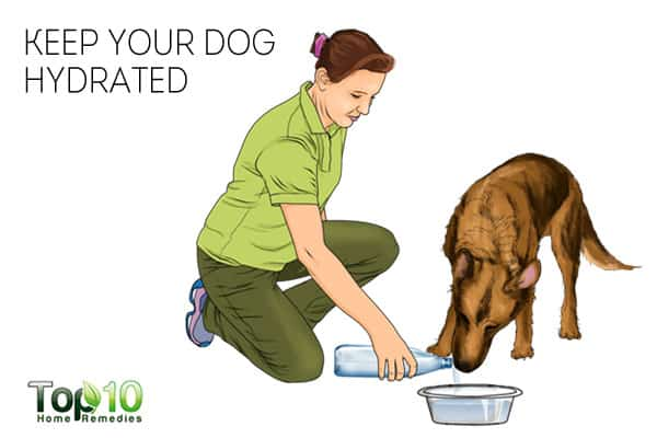 Give water to keep your dog healthy in winter