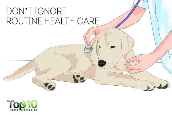 Mainatin routine health care to keep your dog healthy in winter
