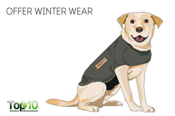 Offer winter wear to keep your dog healthy in winter