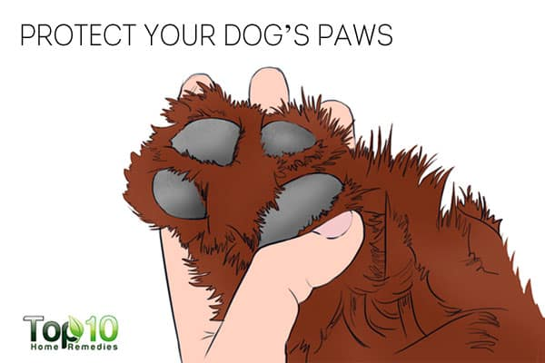 Protect your dog's paws to keep your dog healthy in winter