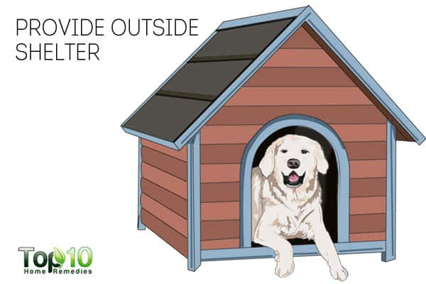 Provide outside shelter to keep your dog healthy in winter