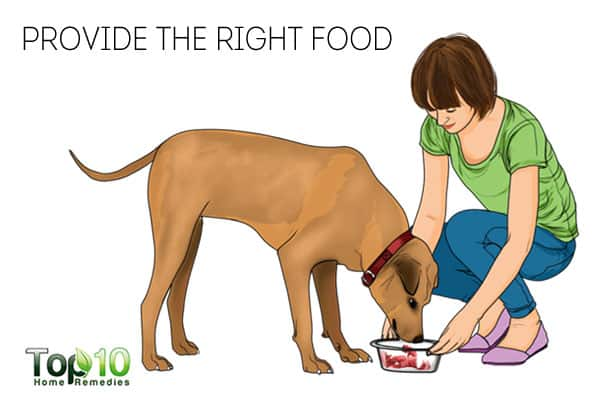 Provide the right food to keep your dog healthy in winter