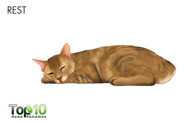 Rest for urinary tract infection in cats