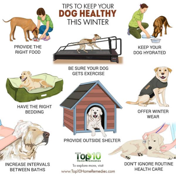 Tips to keep your dog healthy in winter