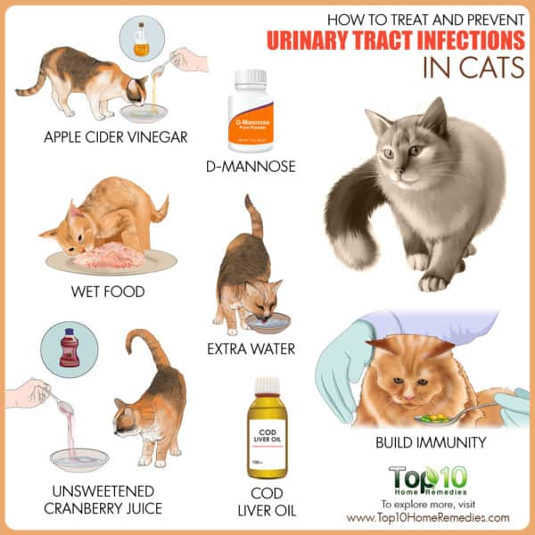 Best Cat Litter For Uti