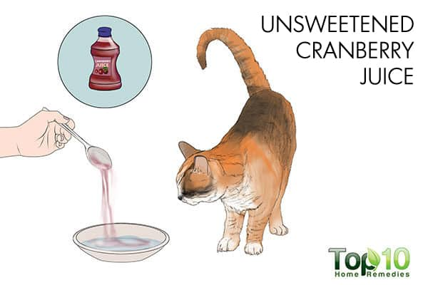 Natural Uti Cure For Cats