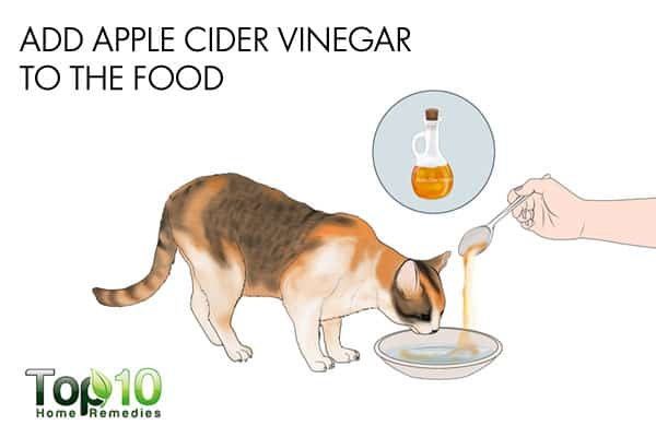 apple cider vinegar to build cat's immunity