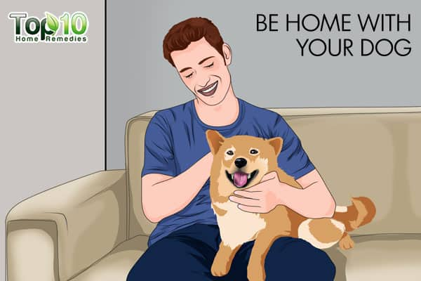 be home with your dog during a thunderstorm