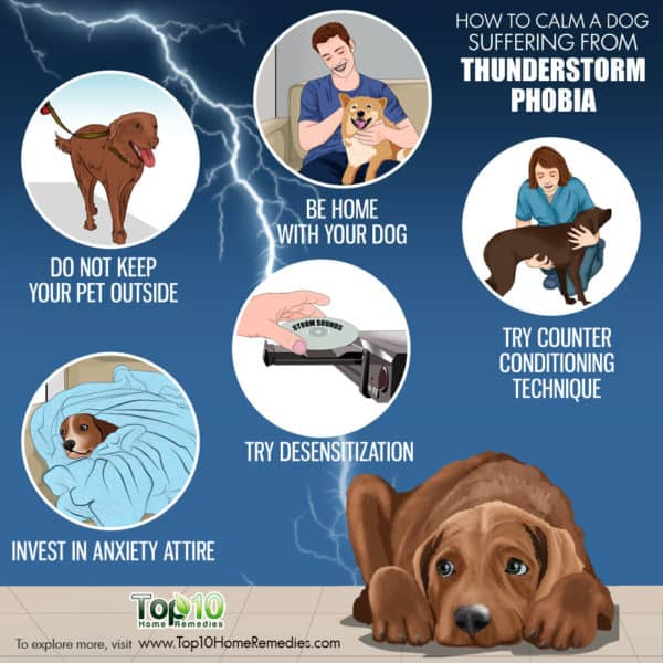 how to calm a dog suffering from thunderstorm phobia