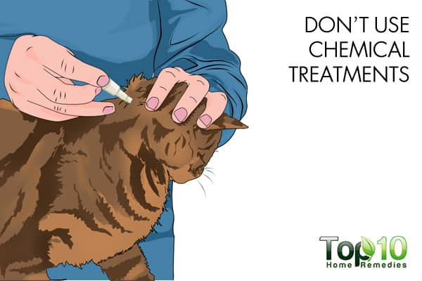 avoid chemical treatments to build cat's immunity