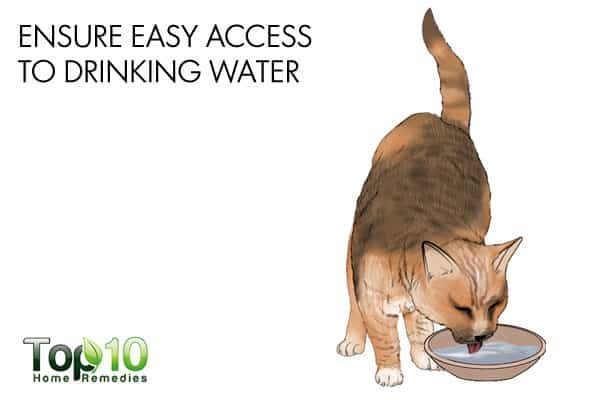easy access to drinking water to build cat's immunity
