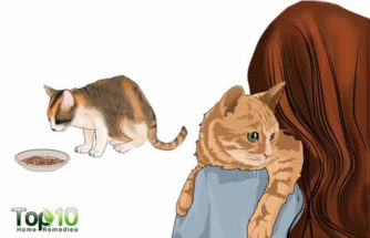 How to Build Your Cat's Immunity
