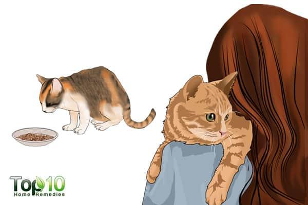 how to build cat's immunity