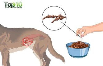 Home Remedies for Tapeworms in Dogs