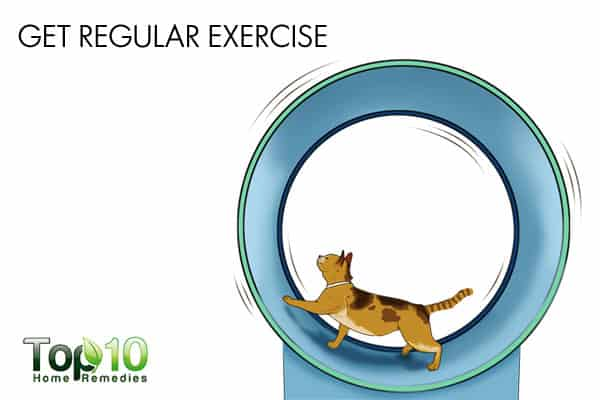 get regular exercise to build cat's immunity