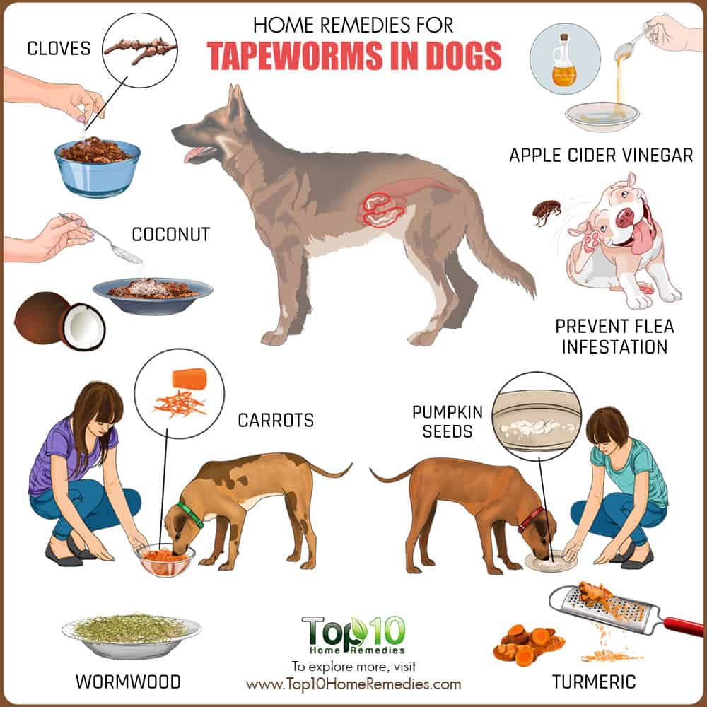 Expelled Tapeworm From Dog Picture